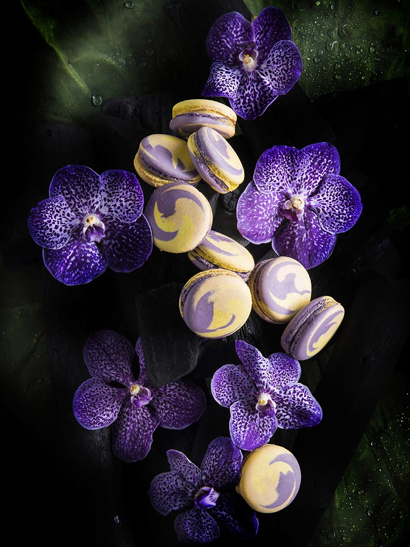 Macaroon orchid